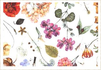 Floral Eve D色